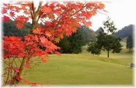 秋のゴルフ」.jpg